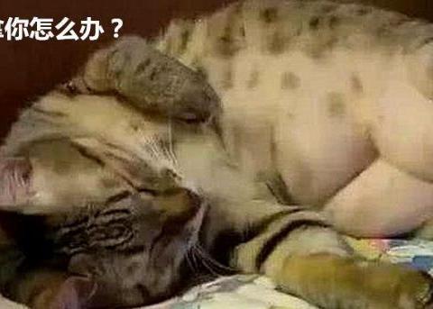 想给猫洗澡,它却不躺下,看到肚皮后,主人终于明白了