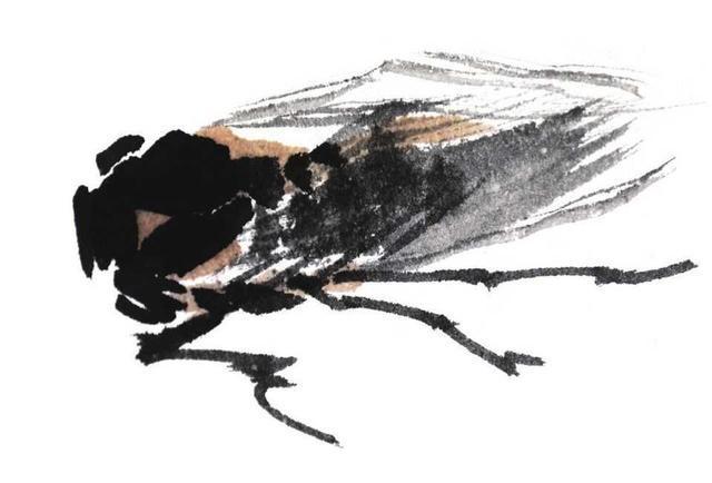 零国画蝗虫步骤:分画法教你画纺织娘,蝉,情趣易学,简单教程基础栓佩戴肛图片