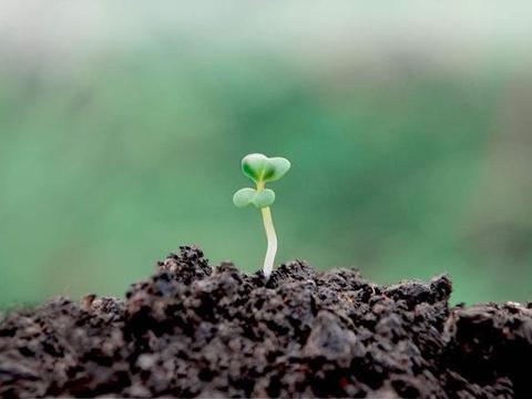 """养花最怕""""肥力""""差,学习老花匠的方法,轻松就能养好花"""