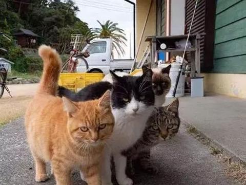 网友在街头拍到一个社会猫小团伙,气势逼人!