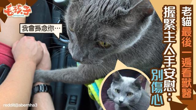 15岁半的老猫最后一次看医生,突然紧握着主人的手安慰:别伤心
