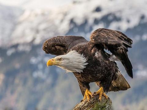 """""""鹰的重生""""是真实的还是虚构的?研究员深入研究后给出答案"""