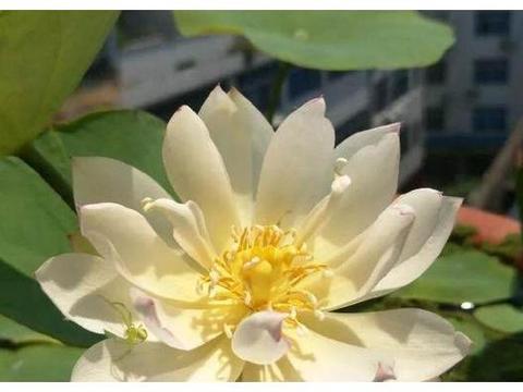 新型观赏花卉,漂亮得像假花,自从养了它,经常有人向我要种子