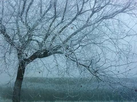 张跃摄影:邹平的小树挂也是美美哒 一起来看看那吧
