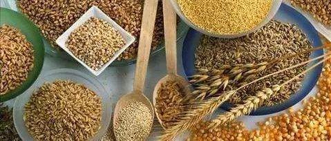 2019年12月中国玉米、大豆供需形势分析