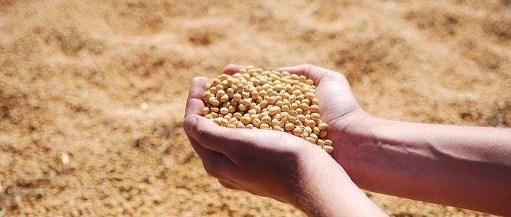 大豆、玉米、水稻,坐家能卖这个价!
