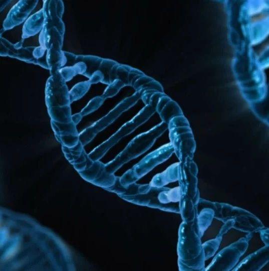 Nature子刊:CRISPR/Cas9基因编辑在灵长类中不会导致明显脱靶效应