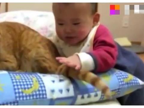 养宠物之前,这些注意事项必须知道,不然对家人和孩子不利