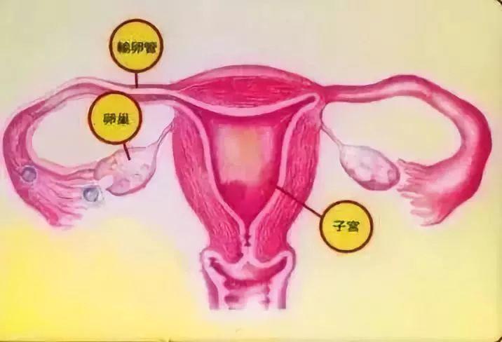 输卵管导致不孕不育,该如何才能当妈?