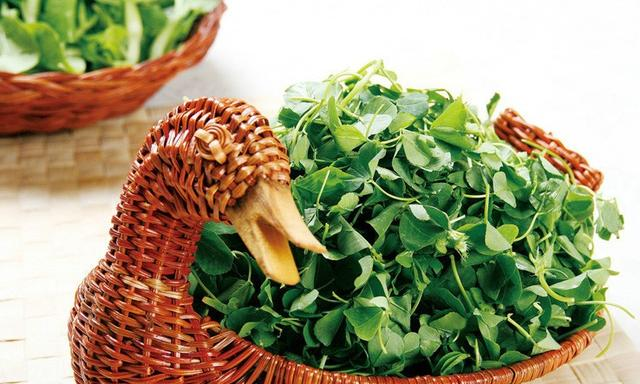 """我国最古老的蔬菜之一,既能去油又能解毒,被称为""""救命草"""""""