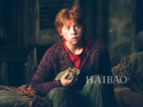 哈利波特中的友情岁月:罗恩和虫尾巴相似经历下的不同选择