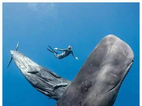 """世界上最浪漫的死亡""""鲸落"""",分解为4个阶段,网友:太凄美了!"""