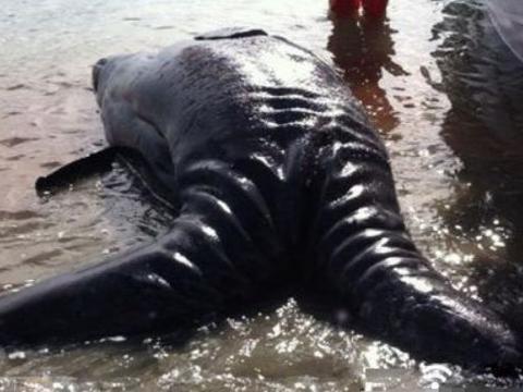 外国男子沙滩游玩发现巨型生物,拥有双头双尾,网友:远古生物