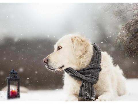 狗狗冬天才皮肤干燥?还可能是严重疾病引起的,主人又该如何预防