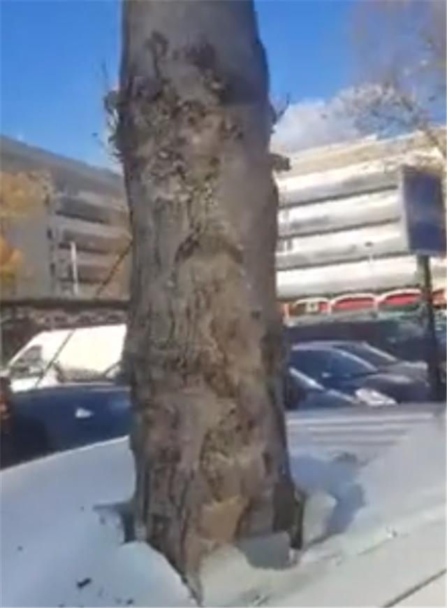 6万吉利被遗弃在街头,车内长了一棵树,车顶和座椅都被树戳穿