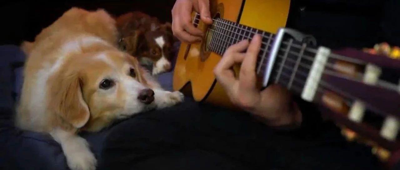 音乐家给大金毛弹吉他,狗子安静又享受的表情,画面太幸福了