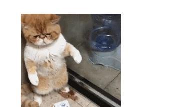 猫:求求你,别杀我,小鱼干都给你,铲屎官:别难过,不吃你