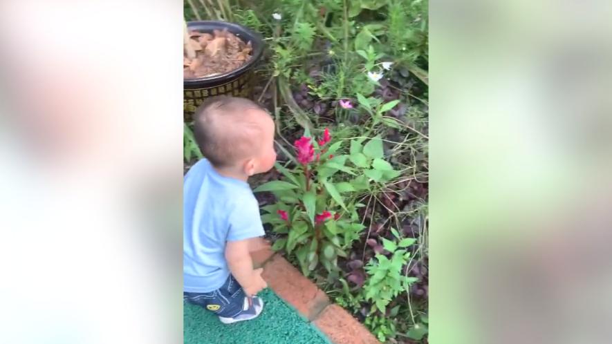 萌娃第一次看到花开,饶有兴趣过去闻,一不小心就摔倒了