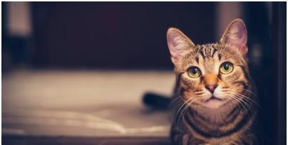 猫瘟这么可怕到底应该如何应对?铲屎官们决不能大意