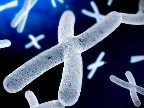 科学家研究称:未来男人可能消失不见,只因Y染色体正在消失中