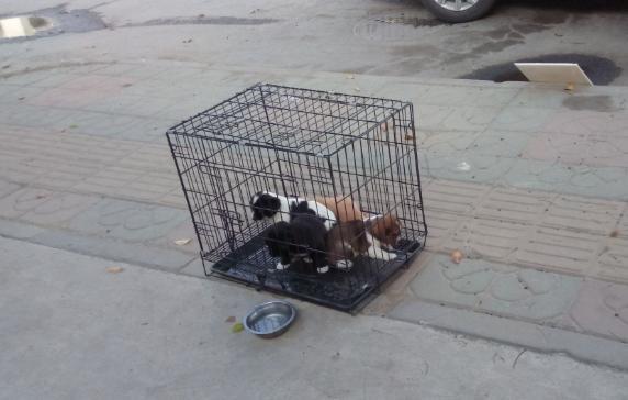 街头卖土狗一只20元,女子嘲笑土狗没资格当宠物,路人笑了!