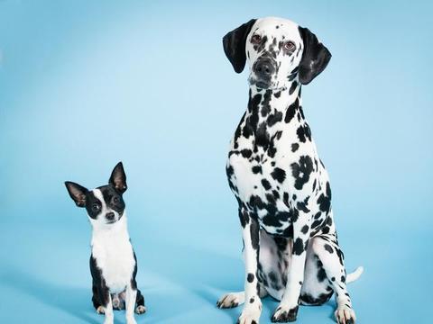 适合家养的狗狗,为你介绍三种,看看有没有喜欢的吧