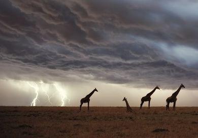 """被""""雷劈""""中的倒霉动物, 长颈鹿想哭了, 最后一位堪称神级幸运儿"""