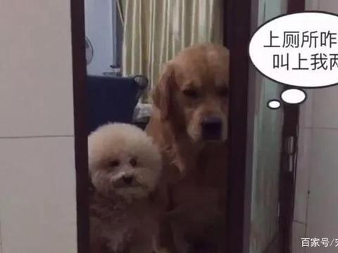 """养狗之后,你会得什么""""后遗症""""?"""