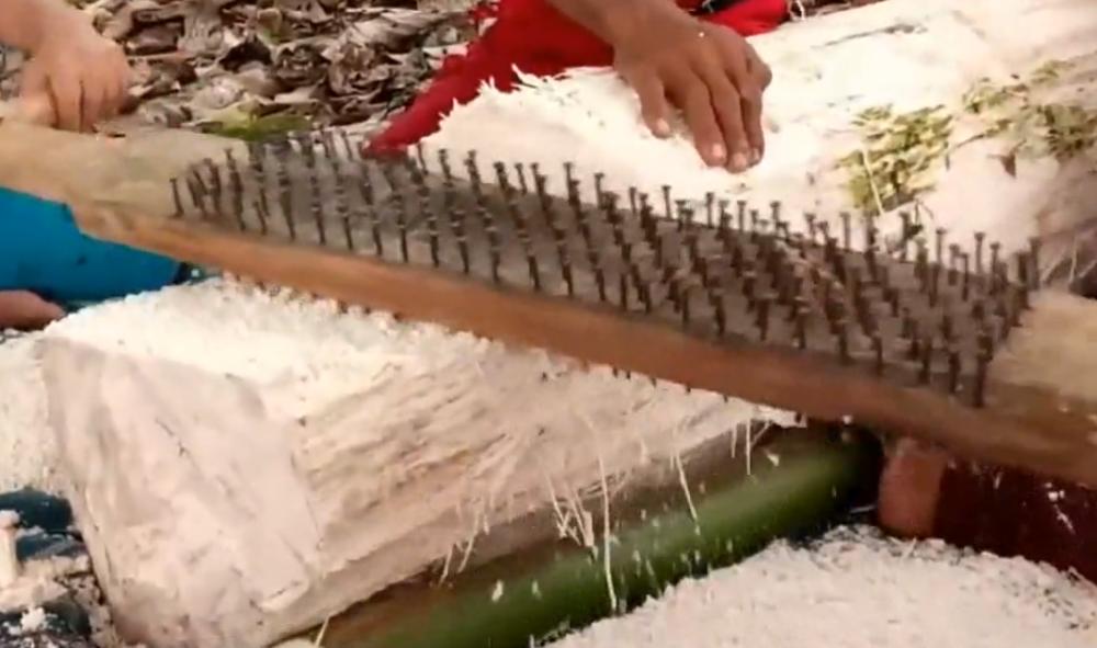 """印度神奇的""""椰子树"""",一棵能产几百斤""""米"""",在国内被做成甜品"""