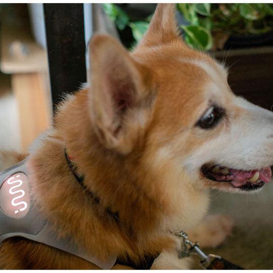 Inupathy将推出宠物穿戴设备 随时掌握宠物的情绪