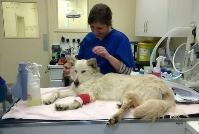 狗狗接受了腿部手术,主人该如何进行护理