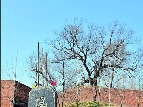 河南武陟:新石器时代至商周时期古遗址商村遗址
