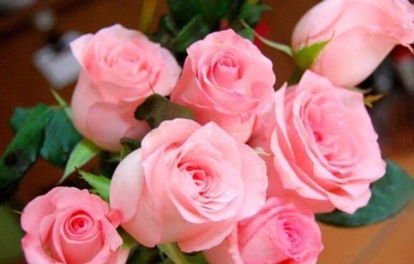 """喜欢菊花,不如养""""高端玫瑰""""戴安娜,粉嫩如公主,寓意唯美爱情"""