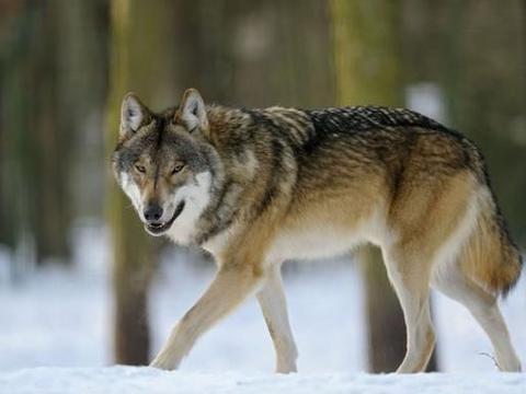 """野生动物同类相残很常见,但你知道动物也会""""自残""""吗?"""
