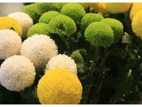 花卉病虫害常见的防治方法,保证花卉生长艳丽多彩,开花茂盛花量