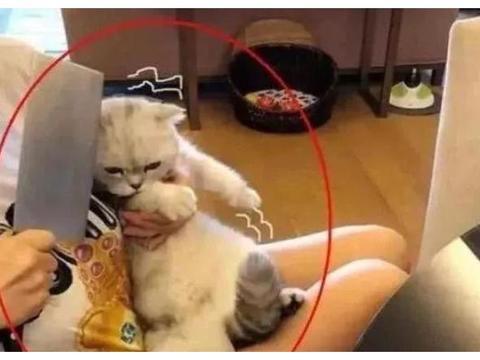 猫咪剪指甲不安分,当主人拿出菜刀,喵怂了:算你狠!