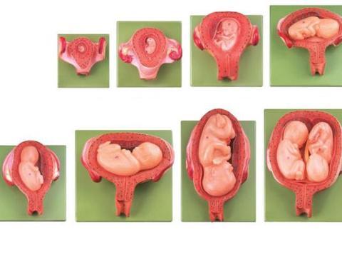 优贝健康UBABE格鲁吉亚试管婴儿什么是胚胎冷冻技术?