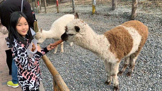 佟大为二女儿近照曝光,长得像爸又像妈,想把动物带回家养有爱心