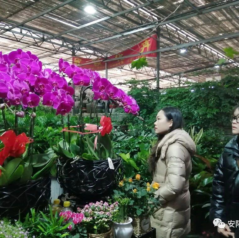 春节消费看市场②丨备年货 过个绿色低碳年