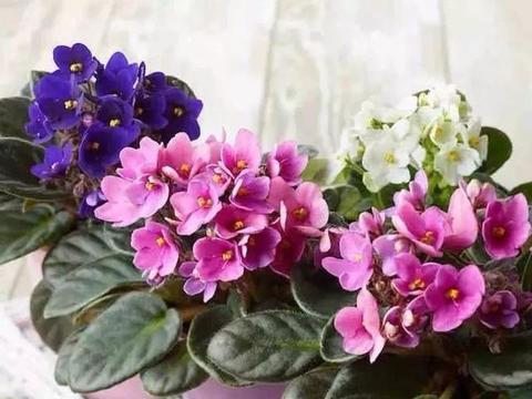 这四种花,一年四季都开花,花期长颜值高,养一盆真值得