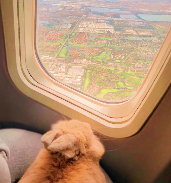 主人带兔子坐飞机,兔兔乖乖趴在座位上,背影把人萌翻