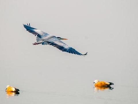 汝州这组惊艳的鸟类摄影作品太美了!谁拍的?