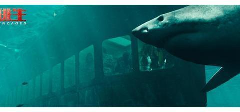鲨海逃生:盲鲨蛰伏玛雅文明?姐妹和解安危与共?文/王珉