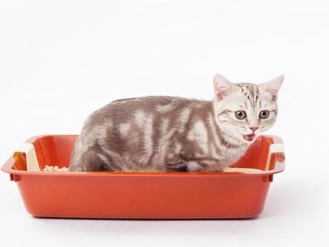 猫砂不是越贵越好,怎么挑选是关键,五分钟教您如何挑选好猫砂