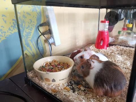 鼠年看鼠!石家庄动物园再添新面孔 魔王松鼠、叙利亚鼠、豚鼠、