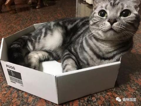 看到橘猫来争箱子,就问你慌不慌