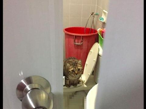 家里的厕所总是没冲,看见猫站在马桶上才明白,猫:猫砂替你省了