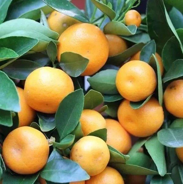 """1种水果=4味""""药""""!经常食用能活血润燥,预防心脑血管疾病!"""