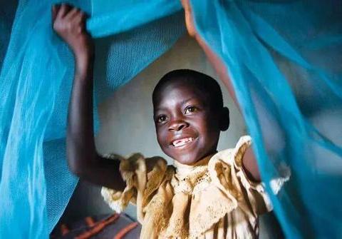 非洲引进蚊帐防蚊,意外发现新用途,另一种动物遭殃了