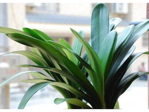 """家里养上""""4种花"""",株型独特,叶片浓绿,空气清新,家人都健康"""